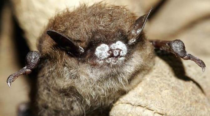 Bad News Bats