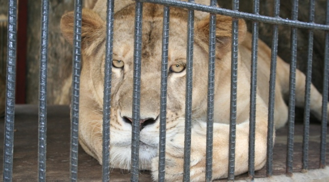 Animals Locked Up: Are Zoos Inhumane?