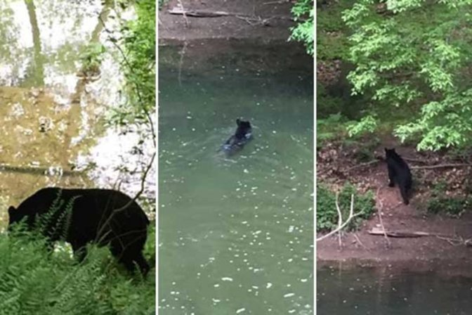 Friday the 13th: Black Bear Spotted in the Wissahickon